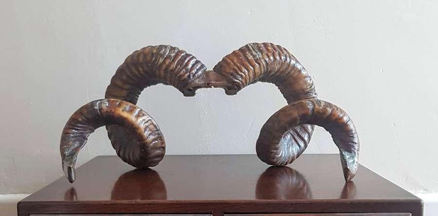 Decorative Rams Horns