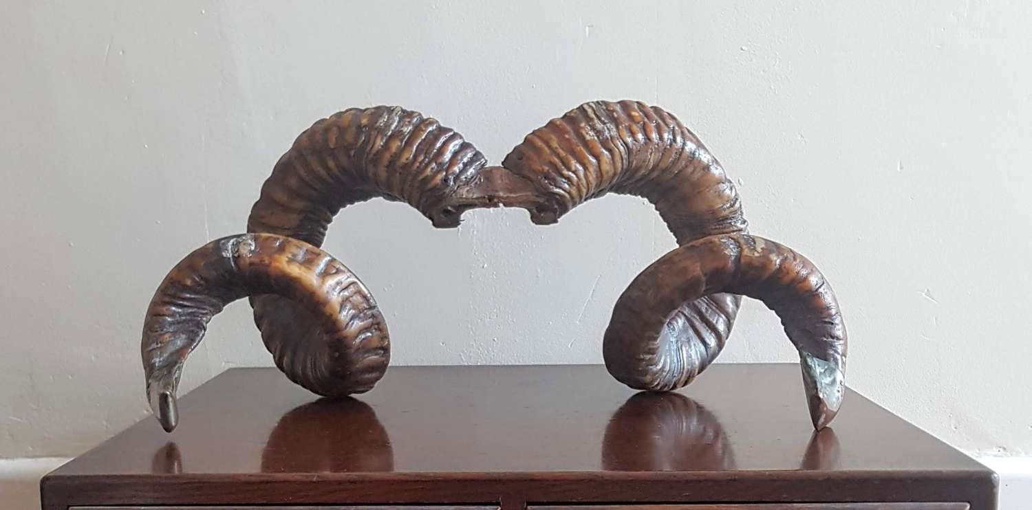 Decorative Rams Horns